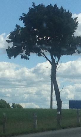 Raging Sky Po-e-Tree Reference