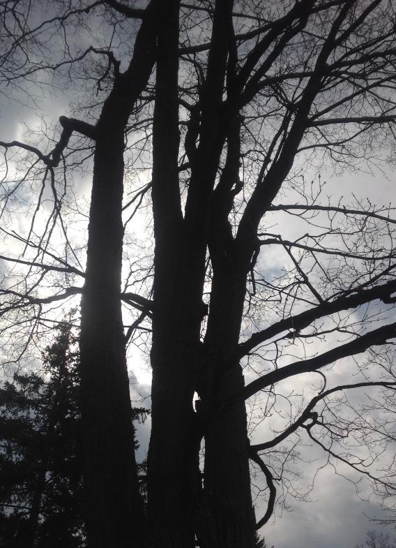 Sun-Shielding GallanTrees Reference