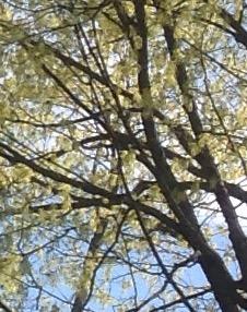 The Joyful Treelease Reference